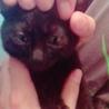 子猫ちゃんの里親さん募集!! サムネイル3
