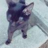 子猫ちゃんの里親さん募集!! サムネイル6