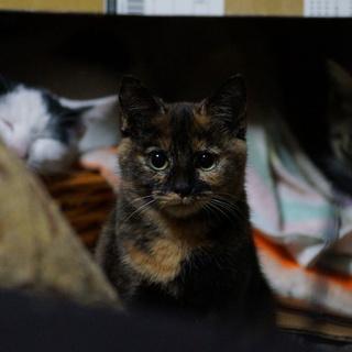 サビ子猫 多分メス