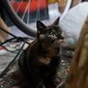 サビ子猫 多分メス サムネイル2