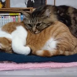 淀川猫といくら。