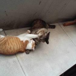 「淀川猫といくら。」サムネイル2