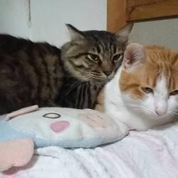 「淀川猫といくら。」サムネイル3