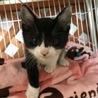 白黒仔猫 甘えん坊で活発な男の子 4ヶ月 ミツヒコ サムネイル4