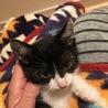白黒仔猫 甘えん坊で活発な男の子 4ヶ月 ミツヒコ サムネイル5