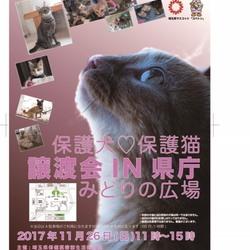 【延期になりました!!】埼玉県庁 保護犬&保護猫譲渡会