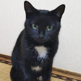 黒猫美人さん