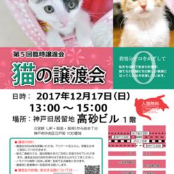 """猫の譲渡会(臨時)in神戸三宮 """" 猫のミーナ """""""