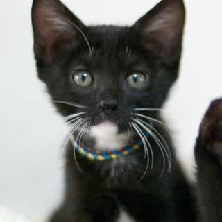 白髭黒猫(青)
