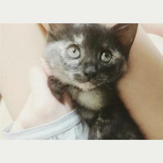 好奇心旺盛!元気いっぱいなスリゴロさん♡兄弟猫