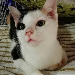 三毛猫 詩ちゃん