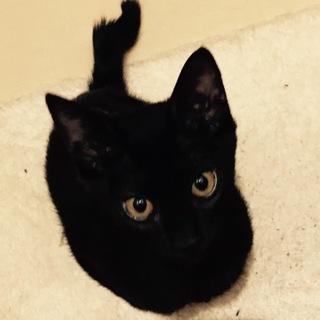 黒子猫♀小さな子の里親様募集です