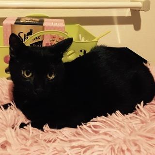 可愛い黒子猫♂ちょっとビビリ君の里親様募集