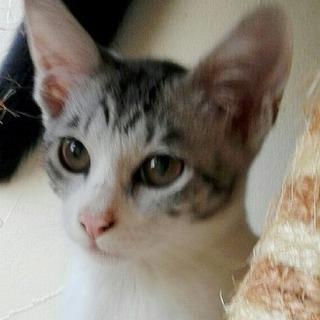 アルパカみたいな横顔 神秘的な美猫モネちゃん