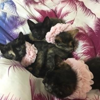 生後一か月の黒猫募集!