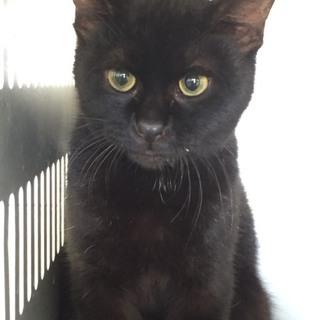 可愛い黒猫ちゃん助けを待っています!【県外可】