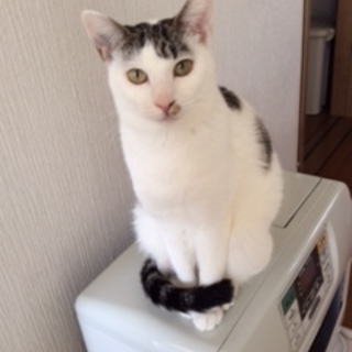 保護した猫(=^ェ^=)