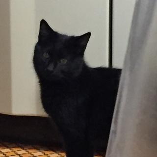 生後5ヶ月の黒猫です。