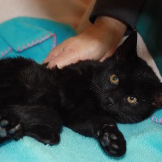 ケージから出してあげたい!かわいい黒猫さやかちゃん