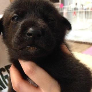 殺処分を乗り越えて…生後1ヶ月の子犬