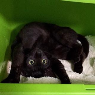 人懐っこい黒猫女の子!