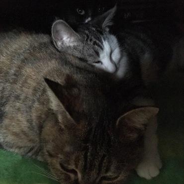 猫山脈。一番奥は目を閉じられたら消えてしまう・・・