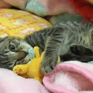 人犬猫大好き保護猫❤️