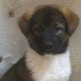 最初は少しビビリくんのオス子犬です。