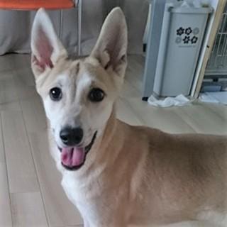 お耳の大きな助三郎!甘えん坊の可愛い子です!