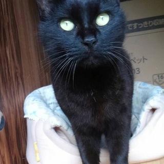 シャイで優しい黒猫ジーナちゃん☆避妊済