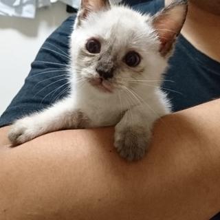 生後3~4ヶ月の子猫♪