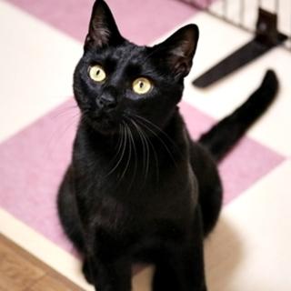 人が大好き!甘えん坊の黒猫くん。