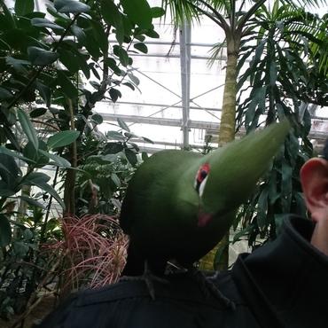 家のりょくではなく、松江フォーゲルパークの烏帽子鳥です。りょくだけの指定席では無いようです。