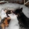 猫4匹里親募集