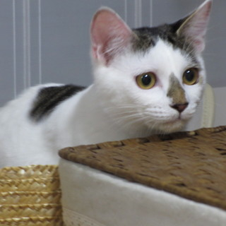 おてんばふわふわ子猫、はすねちゃん
