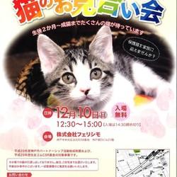 12時半~15時 猫の譲渡会(にゃんずプロジェクト&㈱フェリシモ猫部)