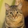 もっふもふ♪膝乗り猫な小柄でかわいいリンダ。