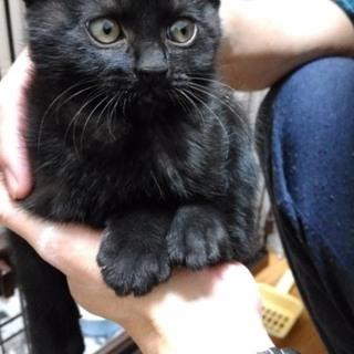 黒猫の男の子