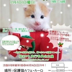 【譲渡会】猫まみれwithカーロ