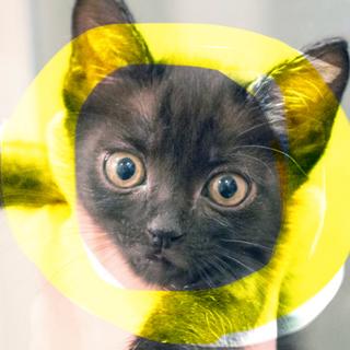 お目目ぱっちり美少年ロミオ金目の黒猫♡抱っこ大好き