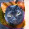ピカピカ黒猫3ヶ月♡甘えん坊抱っこ猫るり