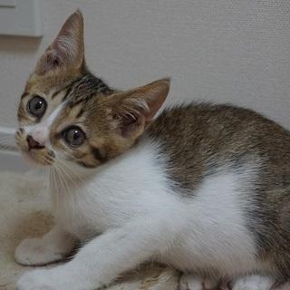 超キュートな顔立ちの子猫