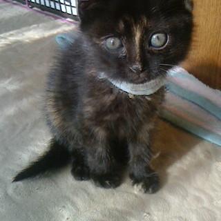 黒猫 ♥ 2か月の女の子
