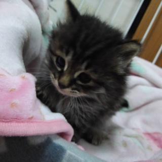 まだ1ヶ月くらいの子猫(あず)