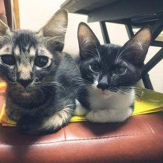 人好きな兄妹猫!家族になってあげてください