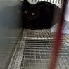 時間がありません 可愛い黒猫ちゃん