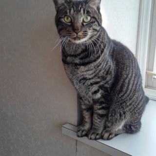 甘えん坊トラ猫ちゃんです!