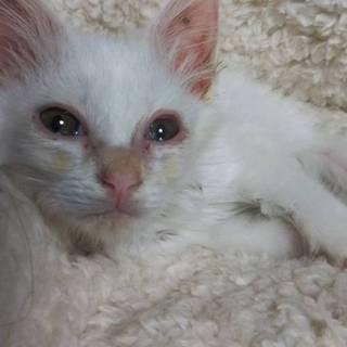 瀕死状態から生き延びた奇跡の子猫ちゃん