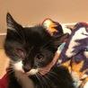 白黒仔猫 おっとり癒し系女の子 4ヶ月 アユミ サムネイル3