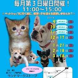 静岡県富士市にて「第5回定期犬猫譲渡会」